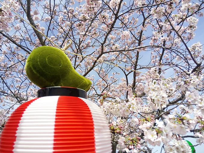 『USA古墳・桜まつり』に参加しました。